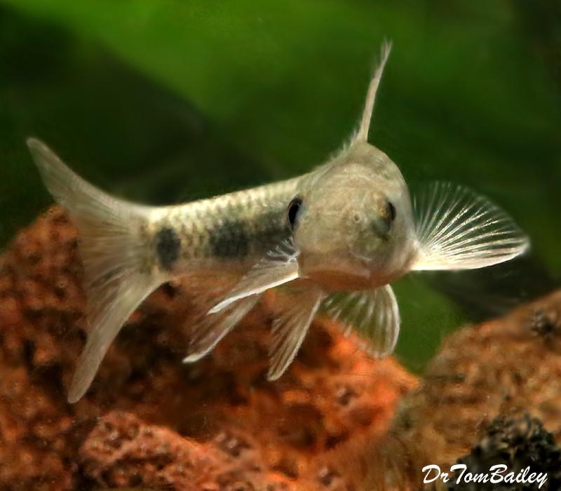 Rare & Exotic Fish