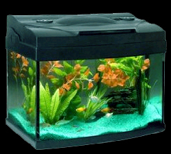 Fish for a 15-gallon Warm-Water Aquarium - Just Fish and Shrimps not the aquarium or decorations.