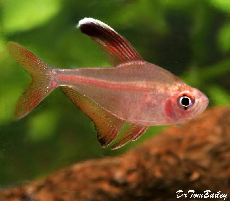 Rare Exotic Fish