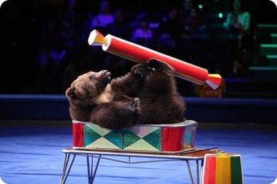 Шоу дрессированных животных