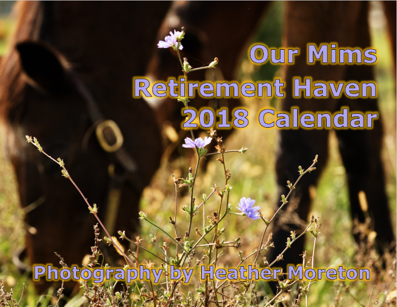 (Last Year!) 2018 Calendar of Haven Horses