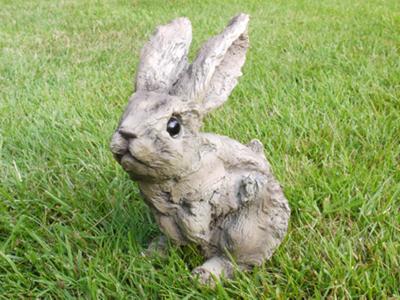 Raymond Rabbit