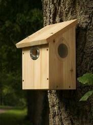 Camera Ready Wildlife Nest Box