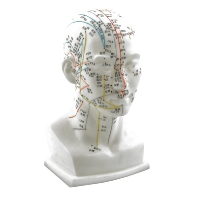 Akupunkturmodell Huvud