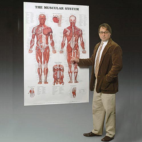 Jätteplansch Muskel eller Skelett 105x155cm 5609815