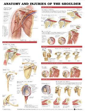 Anatomi & Skador i Axeln (3B)