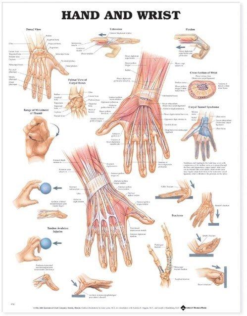 Hand & Handled (ACC)