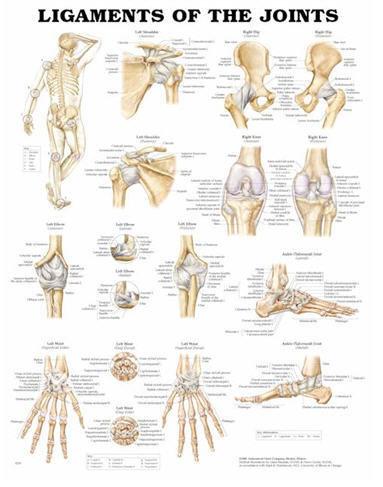 Leder & Ligament (ACC)