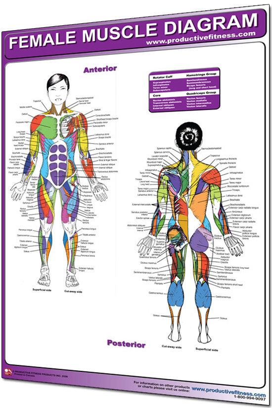 Anatomi Kvinna