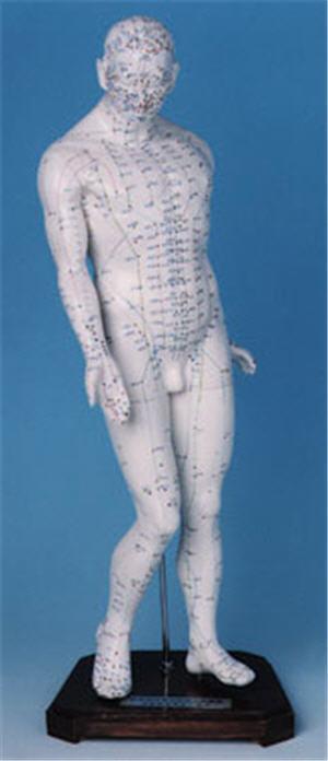 Akupunkturmodell 45 cm