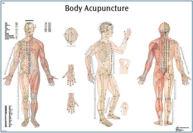 Akupunktur Plansch  98x68cm 5571820