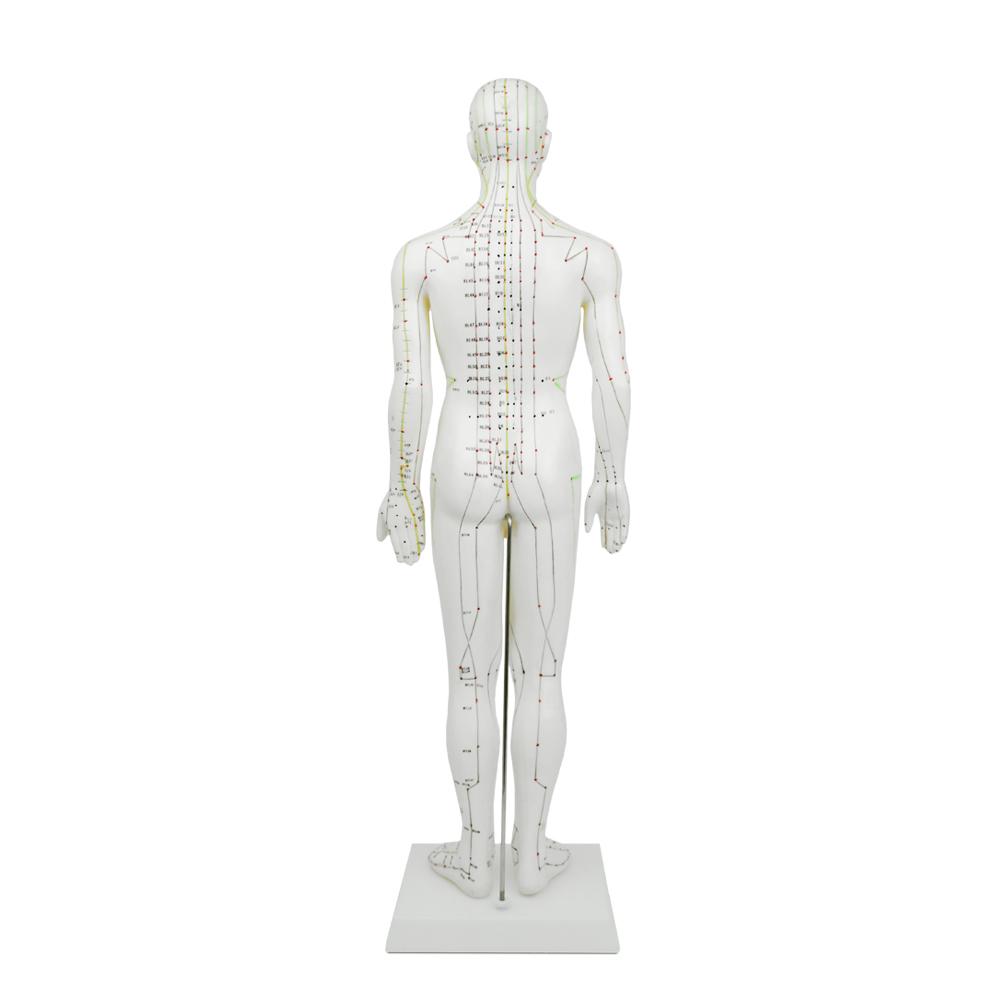 Akupunkturmodell 26cm