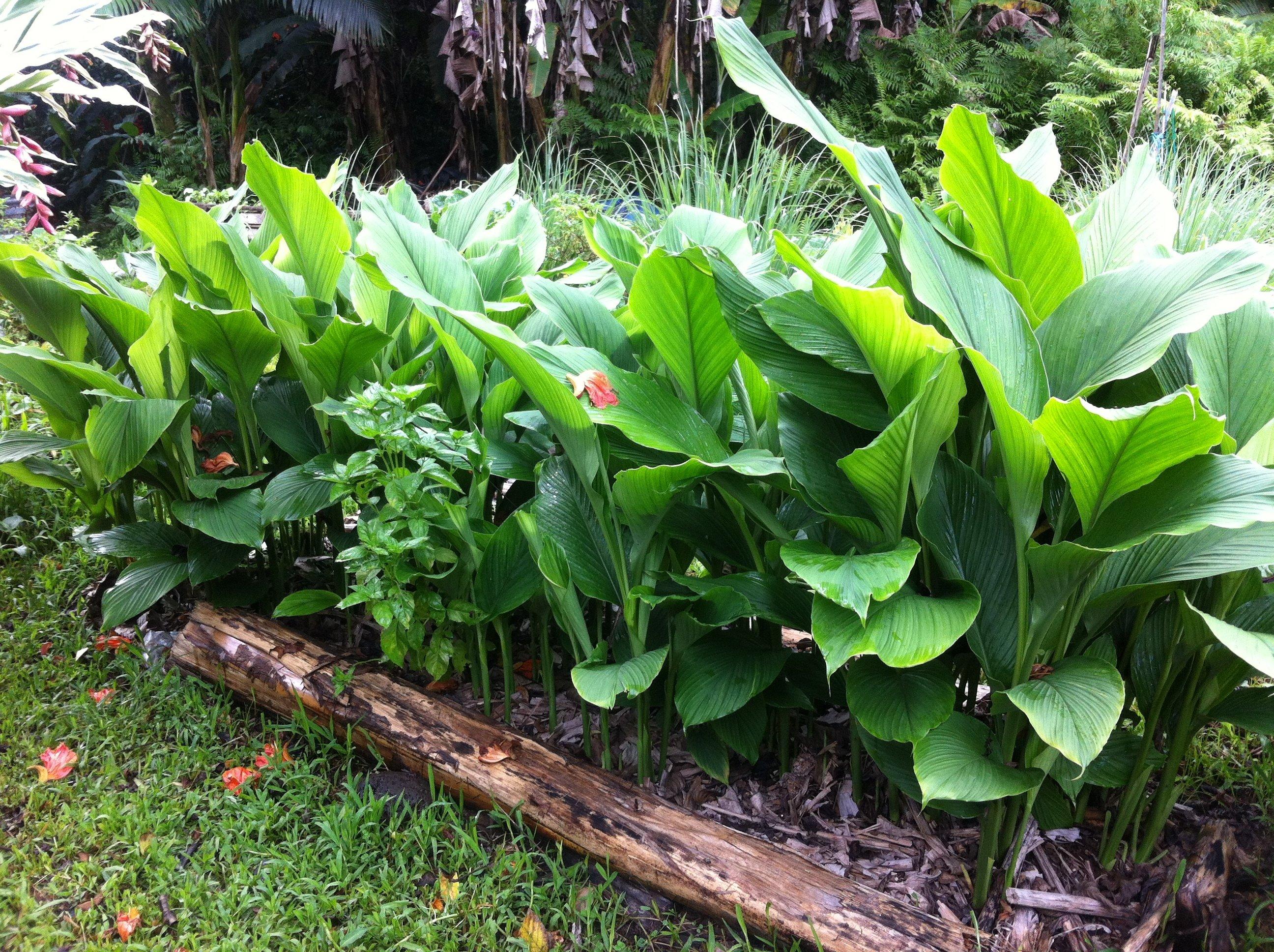 Raised beds enhance soil