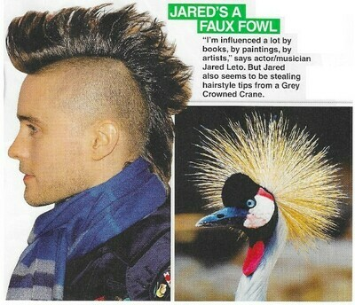 Leto, Jared / Jared's a Faux Fowl   2 Magazine Photos with Caption   March 2010
