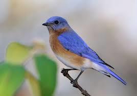 Bluebird Nest Box (not assembled)