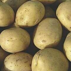 Seed Potato Dunluce (per Kg)