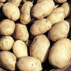 Seed Potato Maris Bard (per Kg)