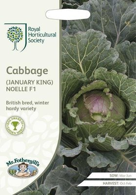RHS Cabbage (January King) Noelle F1