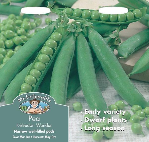 Pea Kelvedon Wonder Seeds