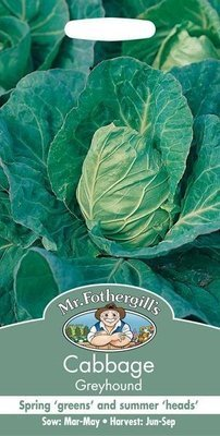 Cabbage Greyhound Seeds