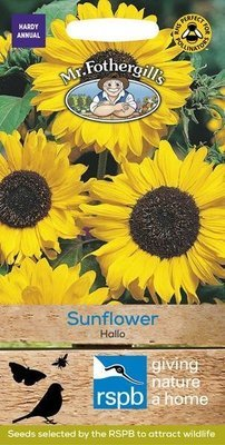 Sunflower Hallo Seeds