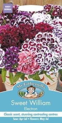 Sweet William Electron