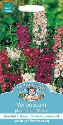 Verbascum Mixed Seeds