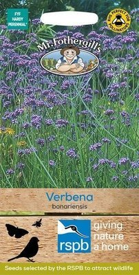 Verbena bonariensis Seeds