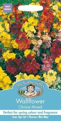 Wallflower Choice Mixed Seeds