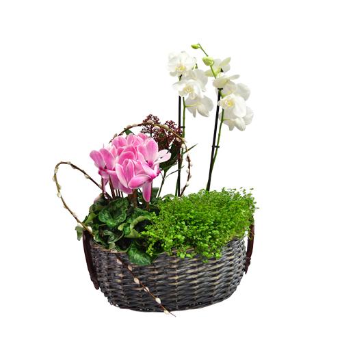 Cesto de Flores 00018