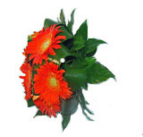 Bouquet Gerberas 00032