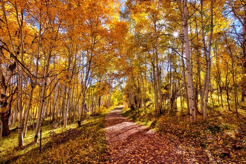 "20"" x 30"" METAL PRINT of Fall Foliage Path, Colorado"