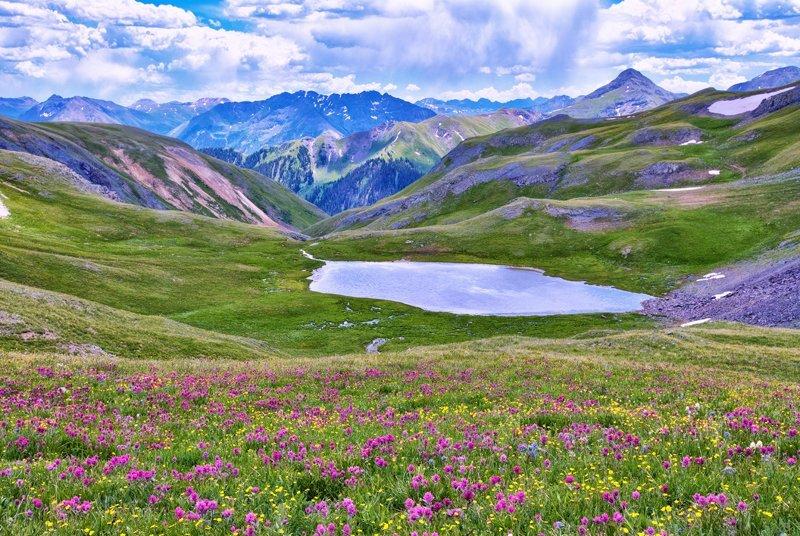 """20"""" x 30"""" METAL PRINT of San Juan Mountain Wildflowers, Colorado"""