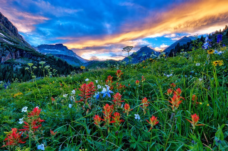 "20"" x 30"" METAL PRINT of Yankee Boy Basin Wildflowers, Colorado"