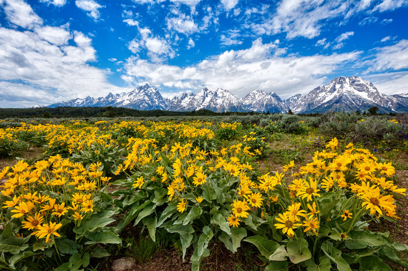 "20"" x 30"" METAL PRINT of Grand Teton National Park, Wyoming"