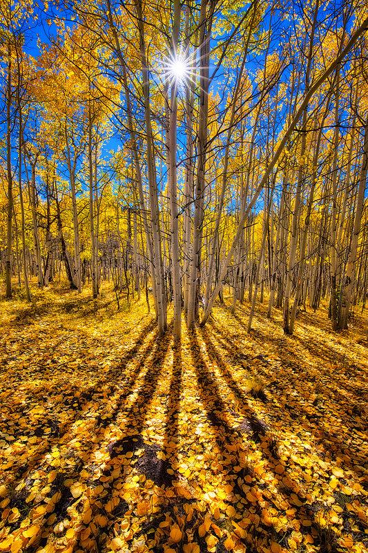 "20"" x 30"" METAL PRINT of Fall Foliage, Colorado"