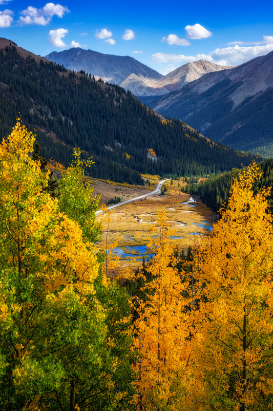 "20"" x 30"" METAL PRINT of Independence Pass Fall Foliage, Colorado"