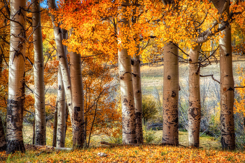 "12"" x 18"" METAL PRINT of Ohio Pass Fall Foliage, Colorado"