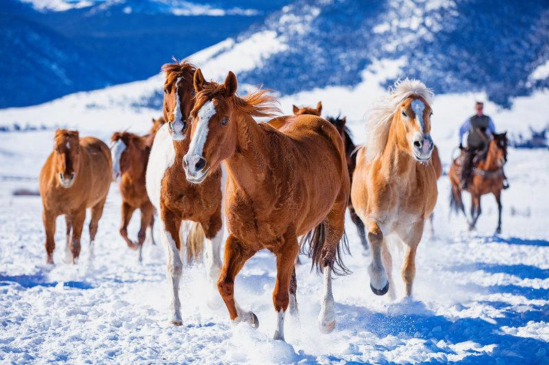 "12"" x 18"" METAL PRINT of Horses in Snow, Colorado"