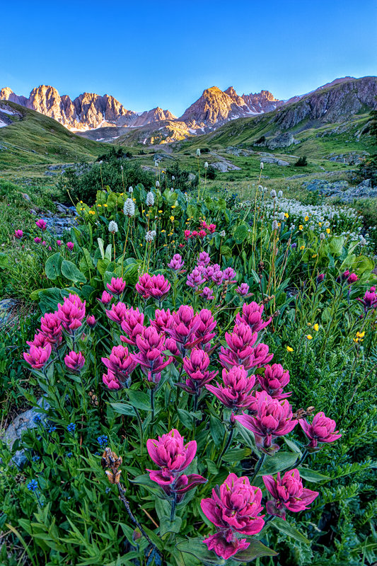 "12"" x 18"" METAL PRINT of American Basin Wildflowers, Colorado"