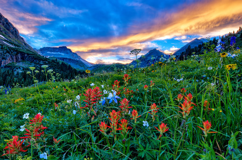 "12"" x 18"" METAL PRINT of Yankee Boy Basin Wildflowers, Colorado"