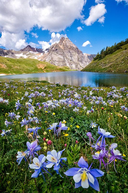 "12"" x 18"" METAL PRINT of Blue Lakes Wildflowers, Colorado"