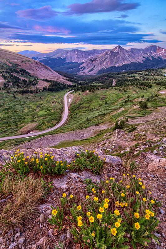 """12"""" x 18"""" METAL PRINT of Cottonwood Pass Wildflowers, Colorado"""