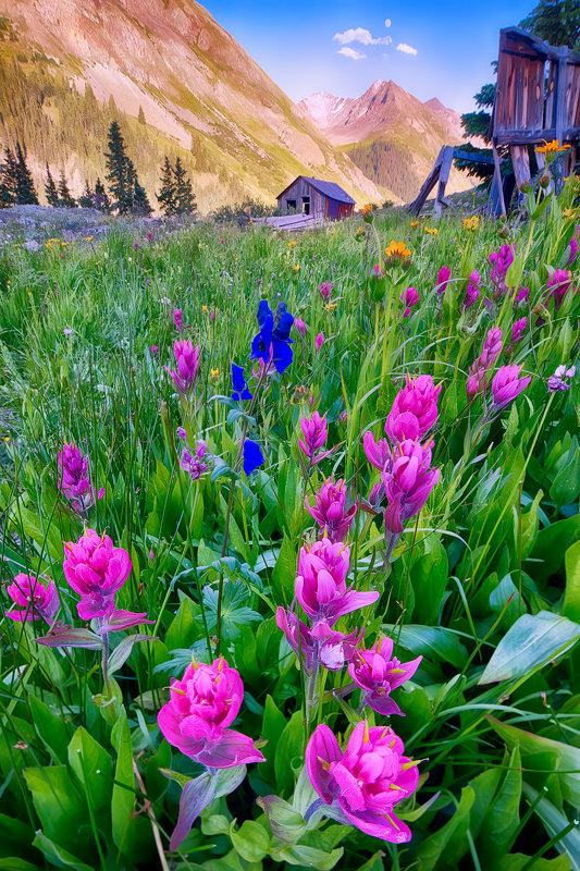 """12"""" x 18"""" METAL PRINT of San Juan Mountain Wildflowers, Colorado"""