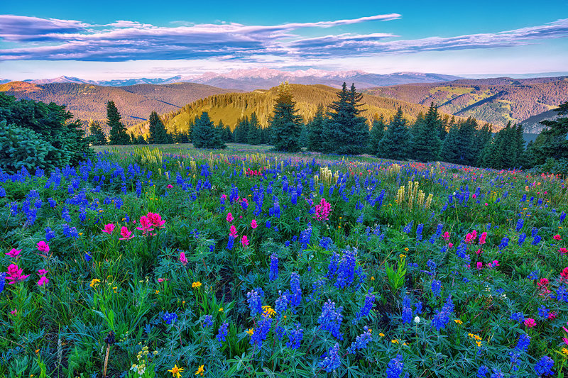 "12"" x 18"" METAL PRINT of Shrine Ridge Wildflowers, Colorado"