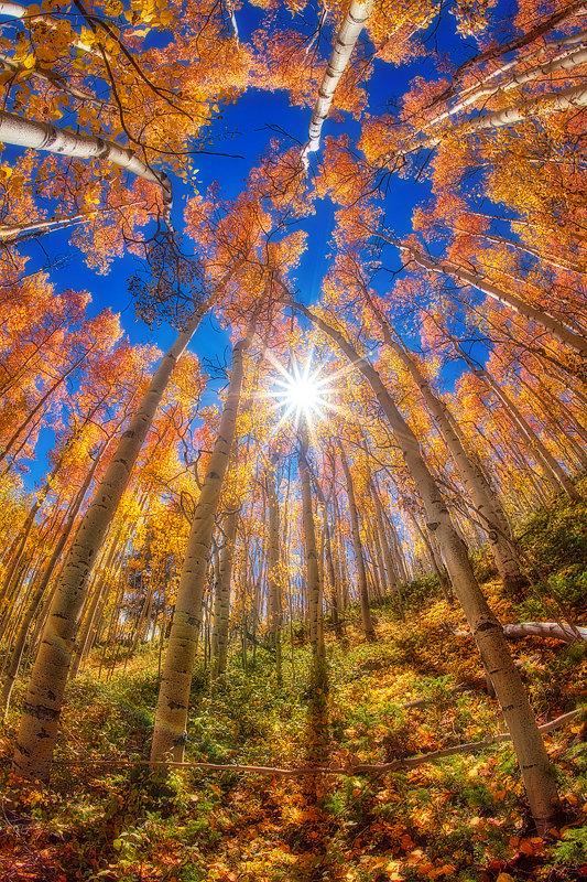 "12"" x 18"" METAL PRINT of Fall Foliage, Colorado"