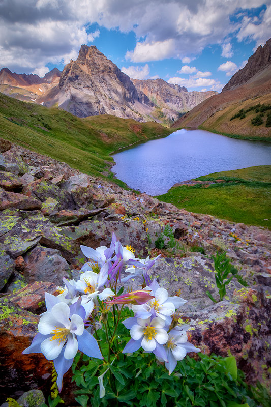 "12"" x 18"" METAL PRINT of Blue Lakes Wildflowers, Colorado"