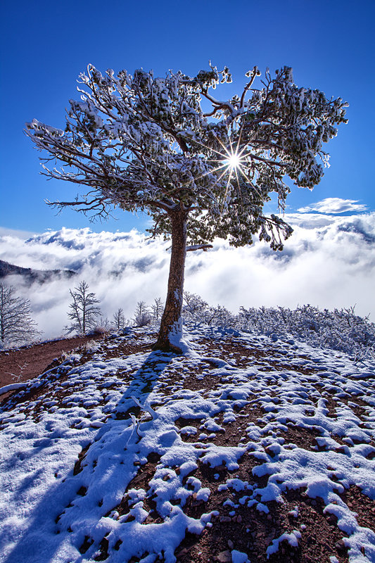 "12"" x 18"" METAL PRINT of Winter, Colorado"