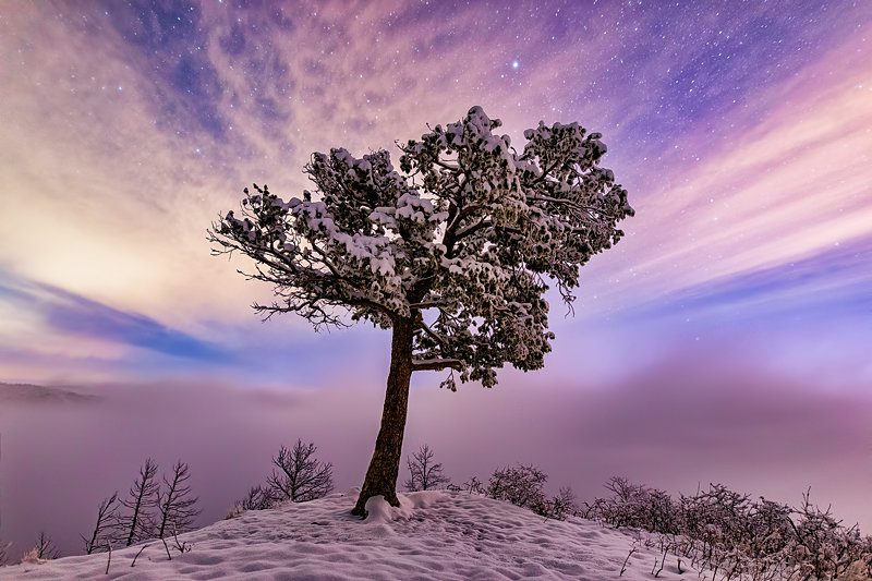 "12"" x 18"" METAL PRINT of Frozen Tree, Colorado"