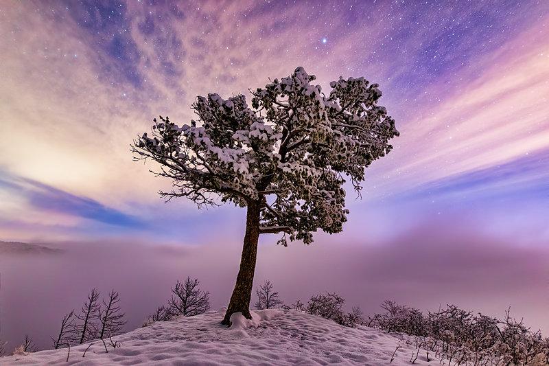 "12"" x 18"" METAL PRINT of Frozen Tree, Colorado"